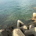 産湯漁港の釣り場紹介、和歌山中紀の濁りや水潮に強い中紀エギングにオススメの漁港