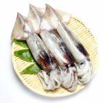 新田井港の釣り場紹介(岡山県玉野)ケンサキイカがタモで大漁