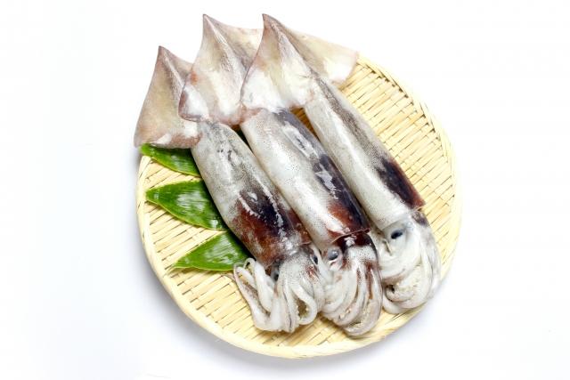 新田井港の釣り場紹介、岡山県玉野のケンサキイカがタモで大漁にすくえる常夜灯漁港