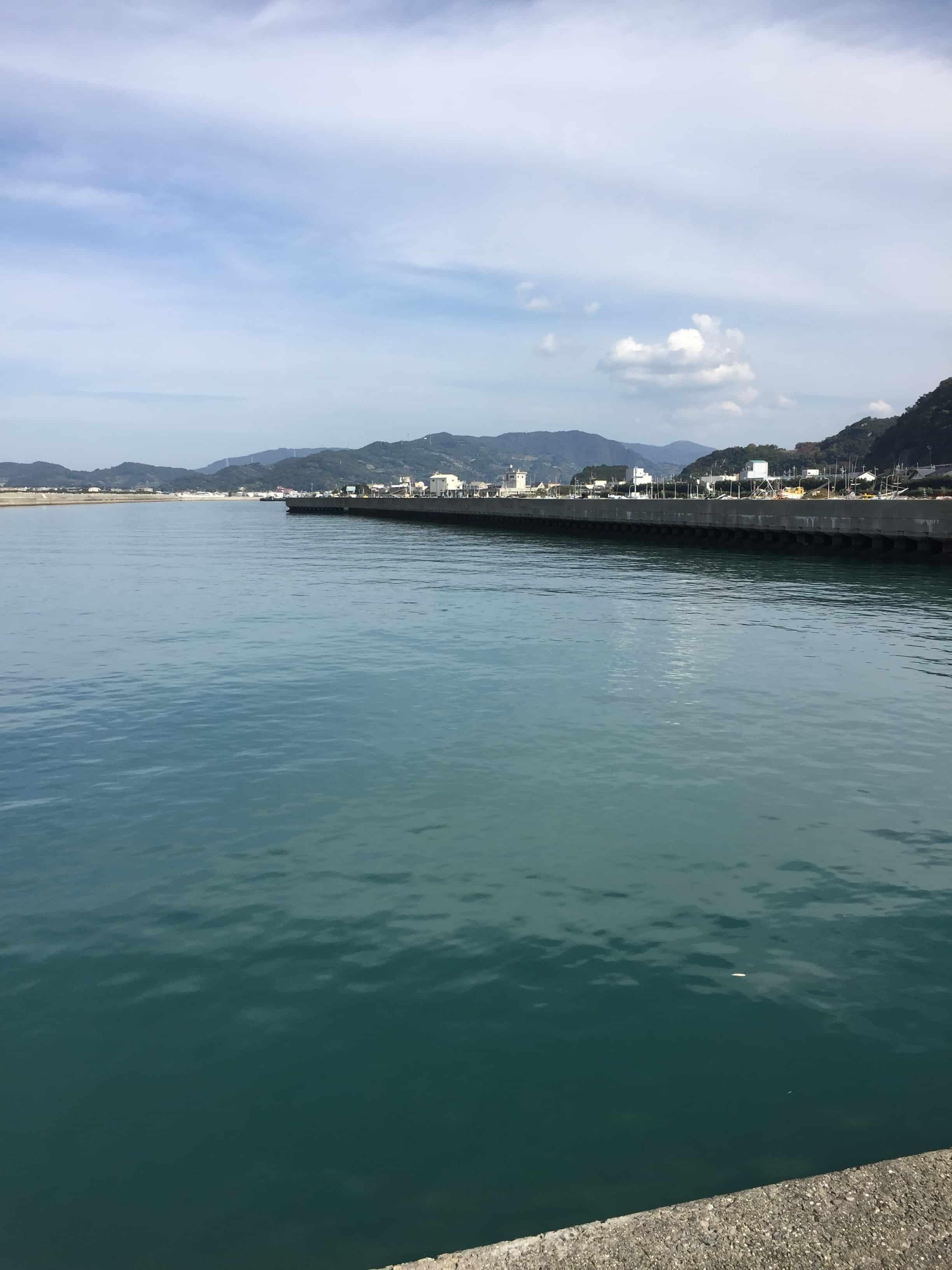 下津漁港の釣り場紹介シーバスコウイカ