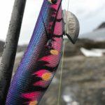 南紀の地磯へレッドモンスター狙いのエギング寒ブリもいるかな釣行・釣果(3月)