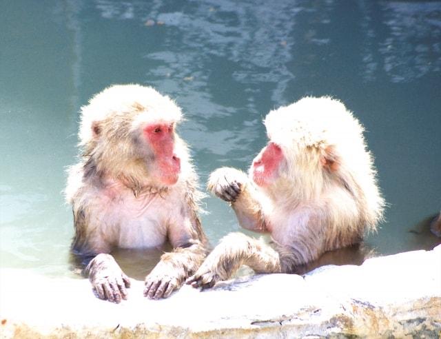 お猿さんの露天風呂