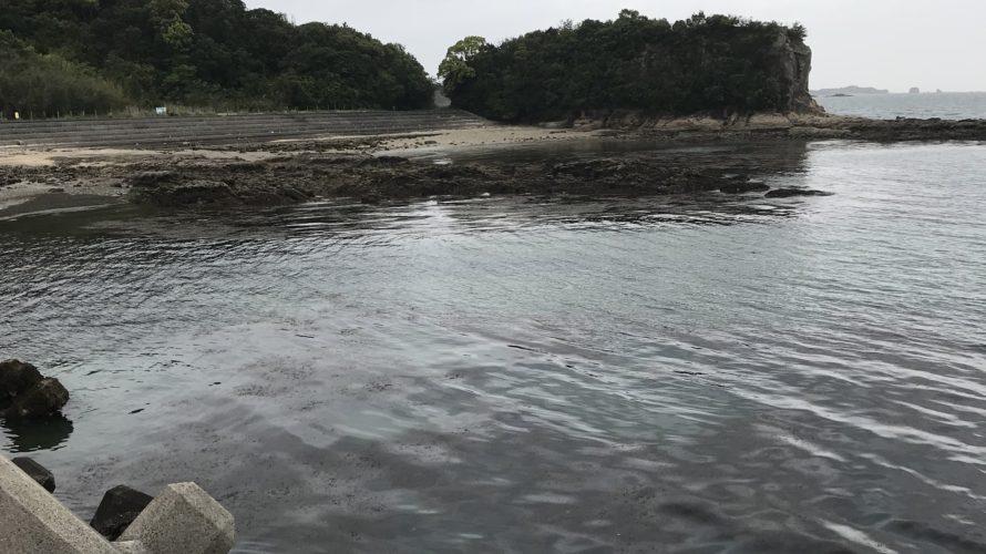 エギングサミットに向けて南紀春イカ調査釣行・釣果報告