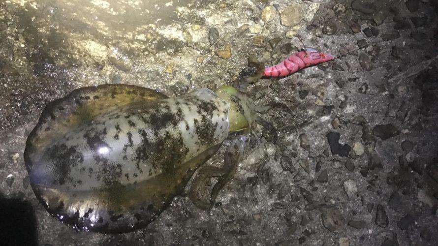 中紀御坊の加尾漁港でエギングアオリイカ秋イカも終盤?