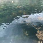 遊子海水浴場のプチ堤防の釣り場紹介、福井県常神半島のエギングにオススメのちょこっと隠れた穴場堤防