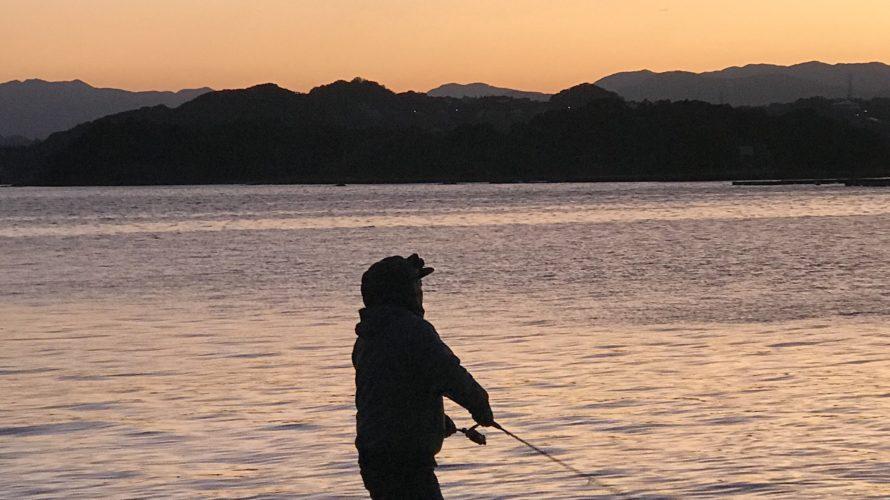 和歌山白浜で秋イカエギングアオリイカの釣果