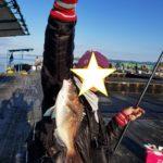 和歌山白浜の堅田漁協のカタタの釣り掘で鯛とイサキ釣り(釣り堀の料金とかシステム)&南紀エギング釣果報告