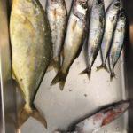夏の和歌山で小型青物狙いのエギングロッドでショアジギング釣行記