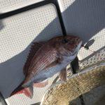 明石タイラバ釣行記。今流行りのネクタイで鯛ラバ、真鯛の釣果(10月)