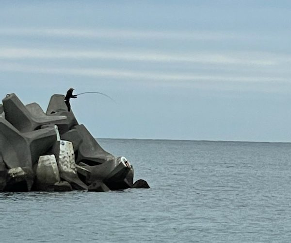 【エギング釣行記】和歌山南紀に春イカを求めてランガン(青物も)。とアオリイカ釣れてる場所と藻の調査(3月)
