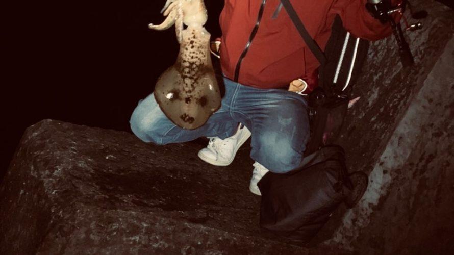 春の大型アオリイカを求めて和歌山南紀白浜でエギング釣行・釣果報告(3月)