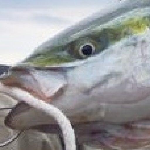 ショアジギングポイント・エギングポイント、おすすめの釣り場マップ