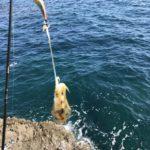 ちょこっと中紀の夏イカエギング小潮釣行釣果報告