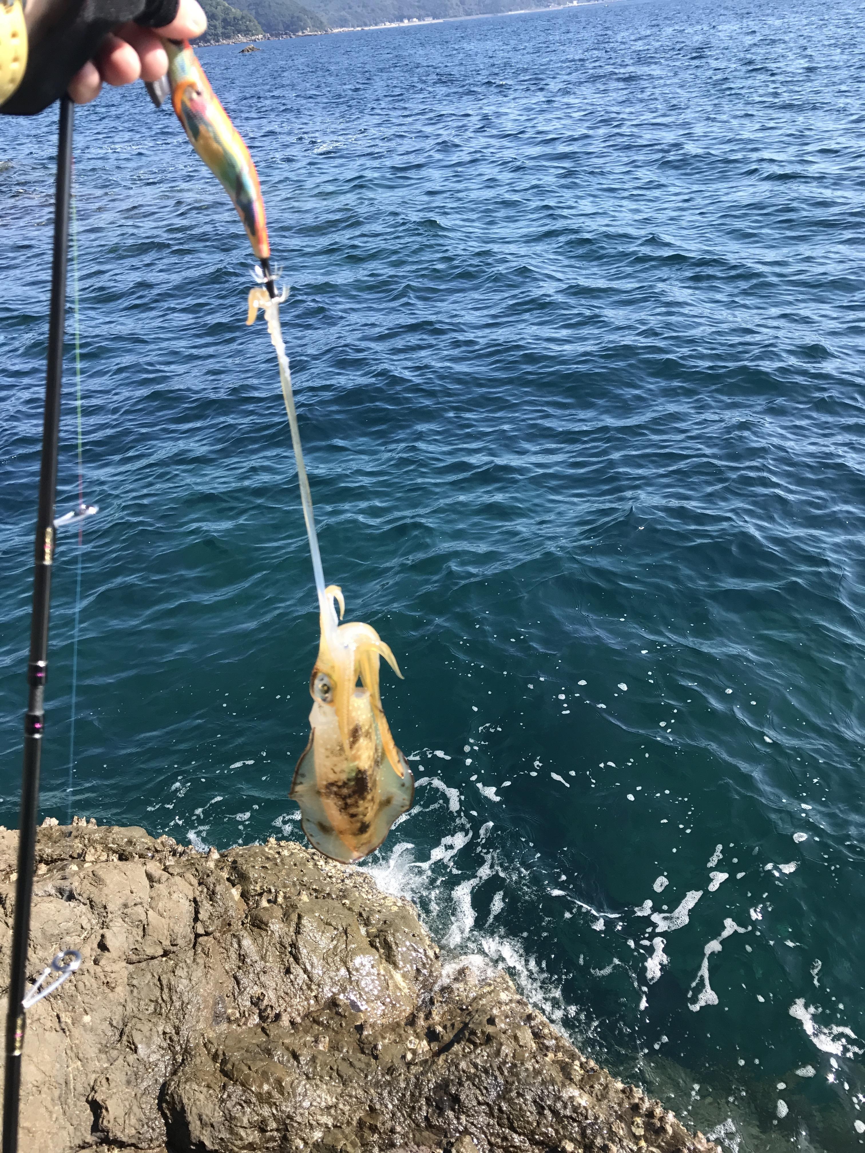 和歌山中紀の夏イカエギング釣行釣果(9月)