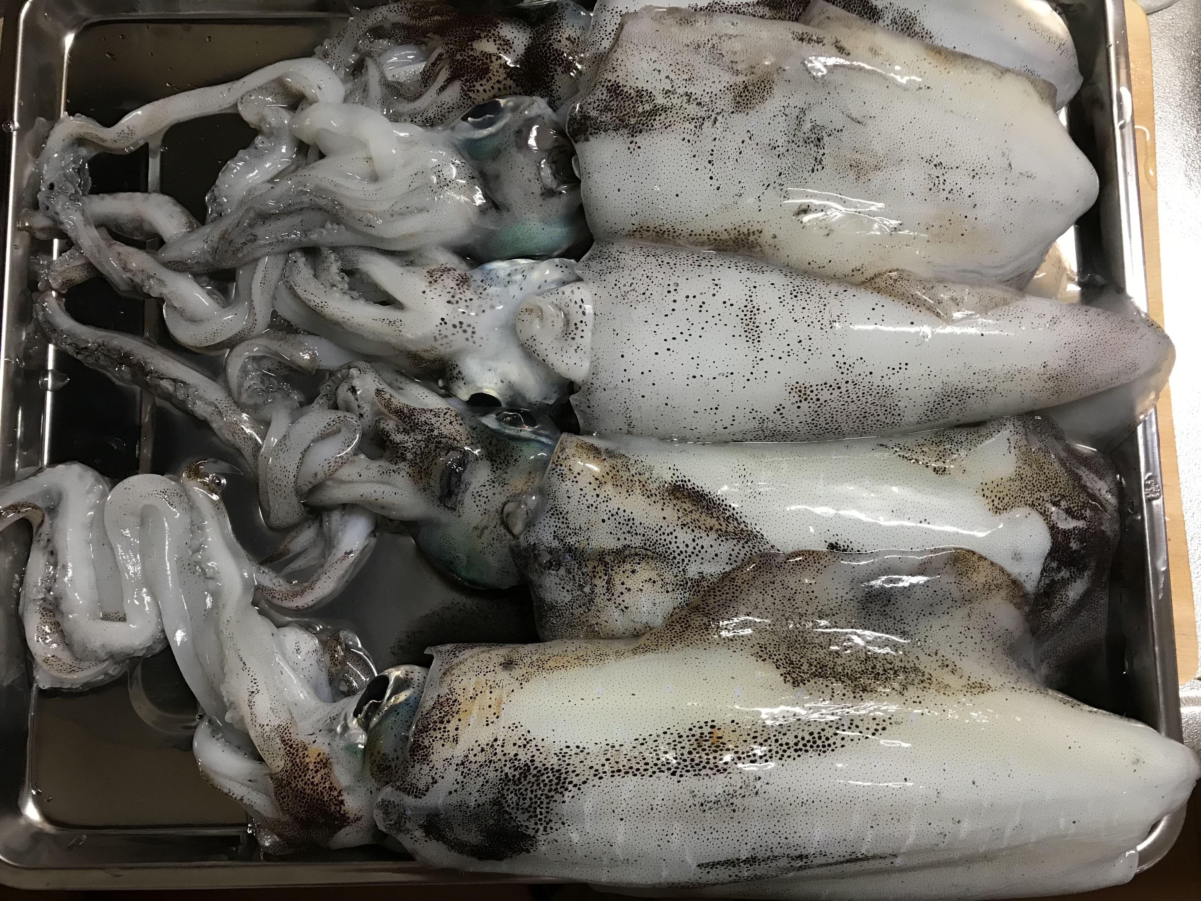 和歌山南紀秋イカエギング勝手にエギングカップのアオリイカ釣行釣果(11月)