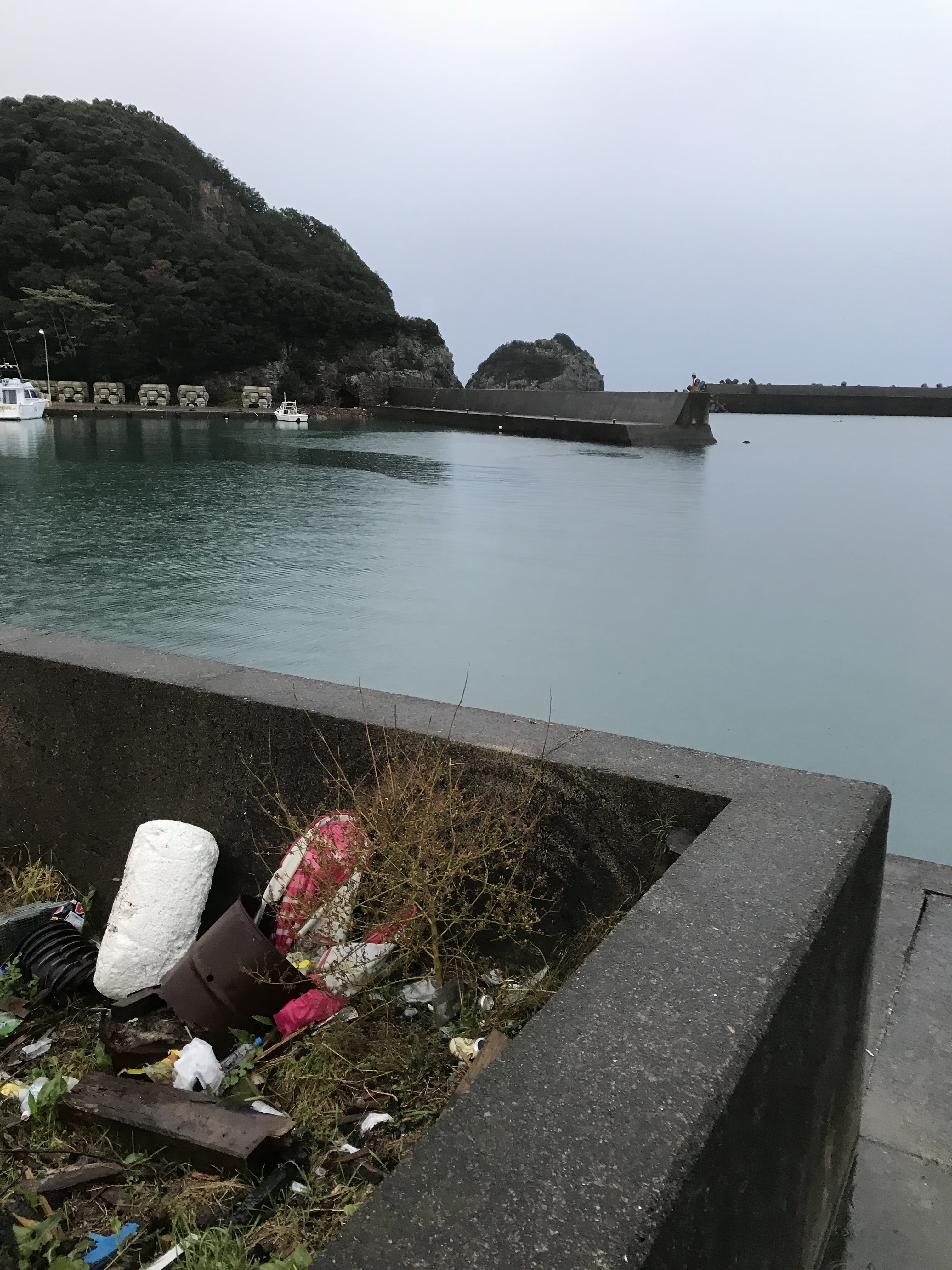 紀伊有田漁港に熱帯魚