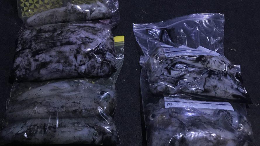 南紀秋の勝手にエギングカップ釣果報告10月に800g台のアオリイカが爆釣