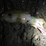 冬のエギングでデカアオリイカを釣る!南紀串本釣行釣果報告