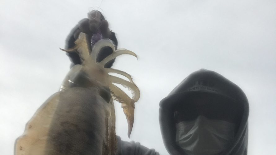 和歌山中紀の意外なエギングポイントで春イカエギング釣果情報釣行記