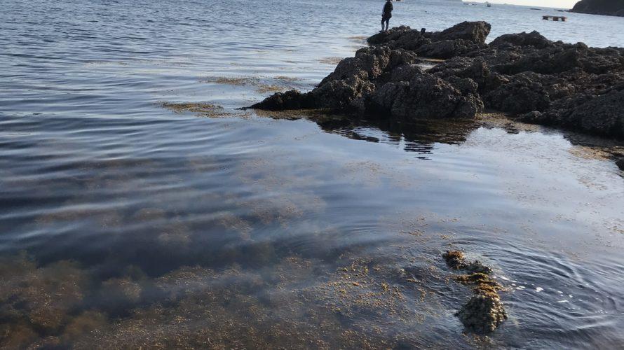 和歌山中紀有田の春イカ狙いのエギングポイント、シャロ―藻場栖原のデン地磯の釣り場紹介