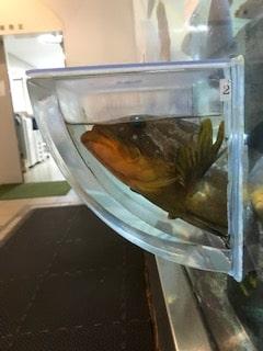 【インスタ映え】エサやりできる無料の穴場水族館「福井県海浜自然センター」(ちっちゃい子連れのファミリーにおすすめ)