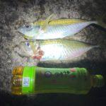 【冬アジング】和歌山冬のアジング釣果報告・釣行記。関西の冬はアツい!(12月)